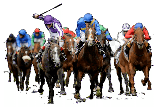 group of horse racing